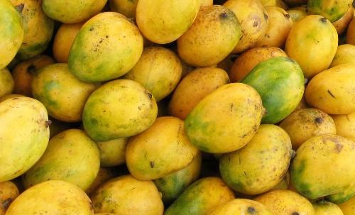 Mango Farming In Africa