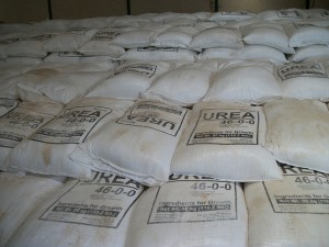 Urea Fertilizer in Kenya Dairy Farming