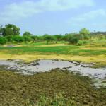 AFRICAN FARMING TECHNIQUES